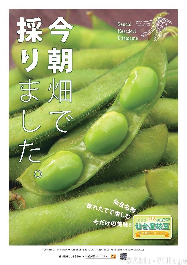 今朝採り枝豆販売します!!